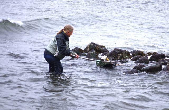 eagle rescue 5- netting the eagle