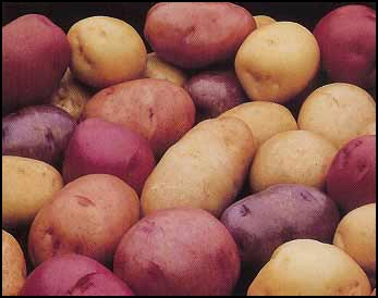 Mother Nature seed potatoes photo